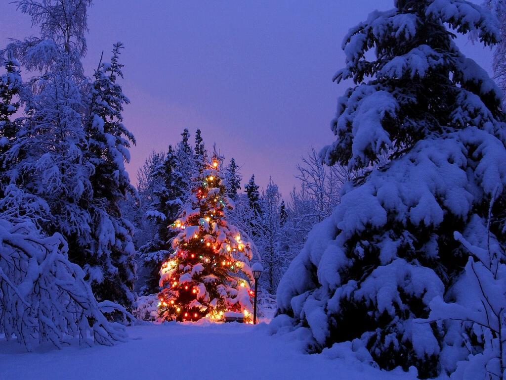 4.christmas-tree-