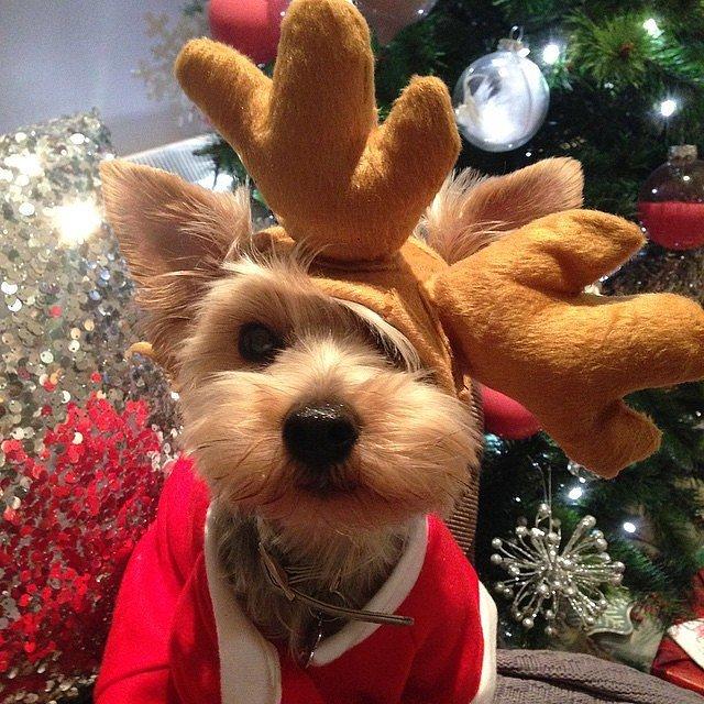 εμμονή με Χριστούγεννα