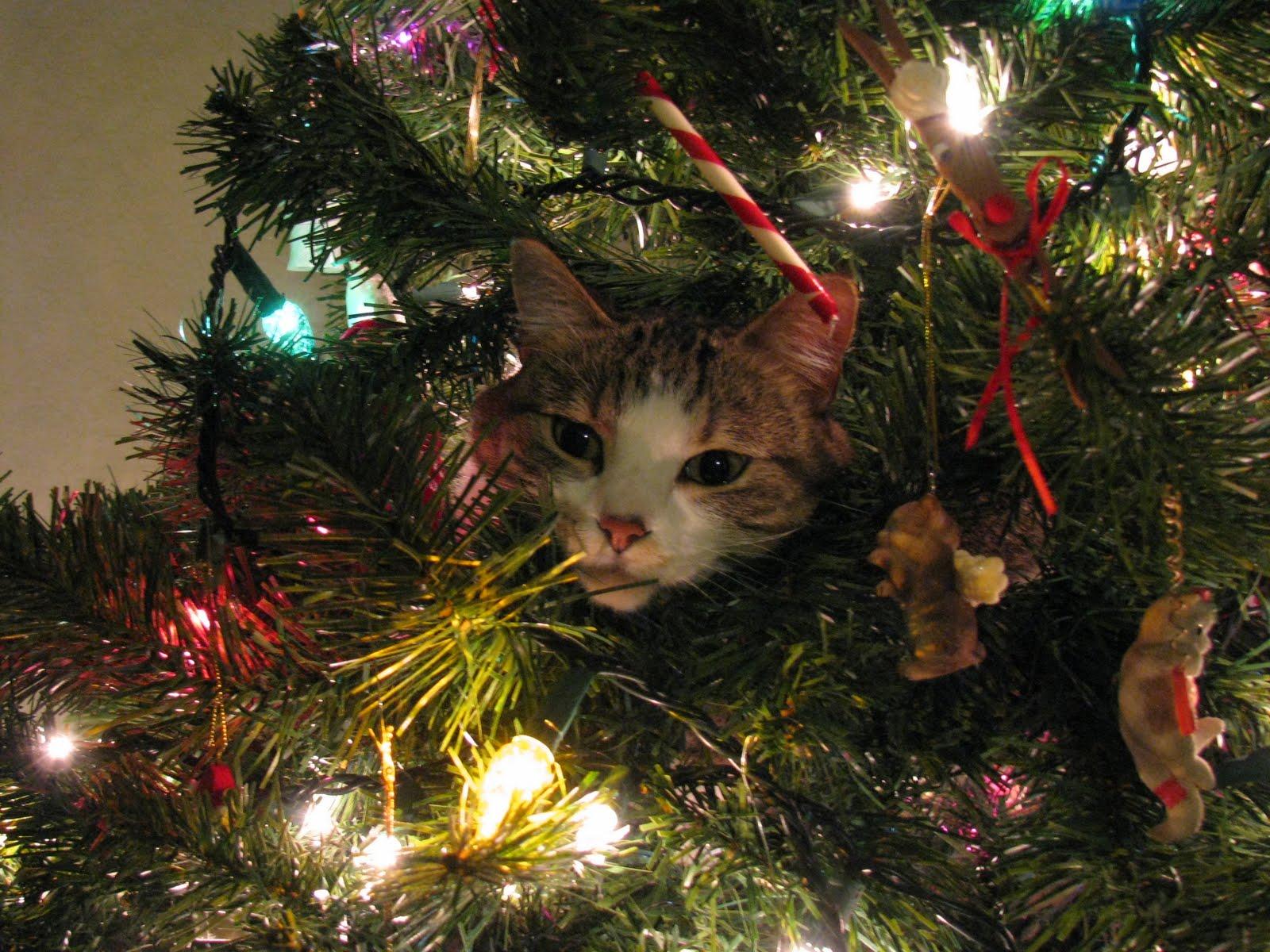 Αποτέλεσμα εικόνας για Γάτες εναντίον χριστουγεννιάτικων δέντρων