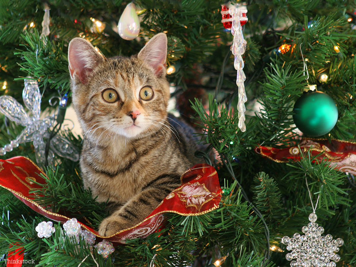 Cat-hiding-cats-and-Christmas-trees