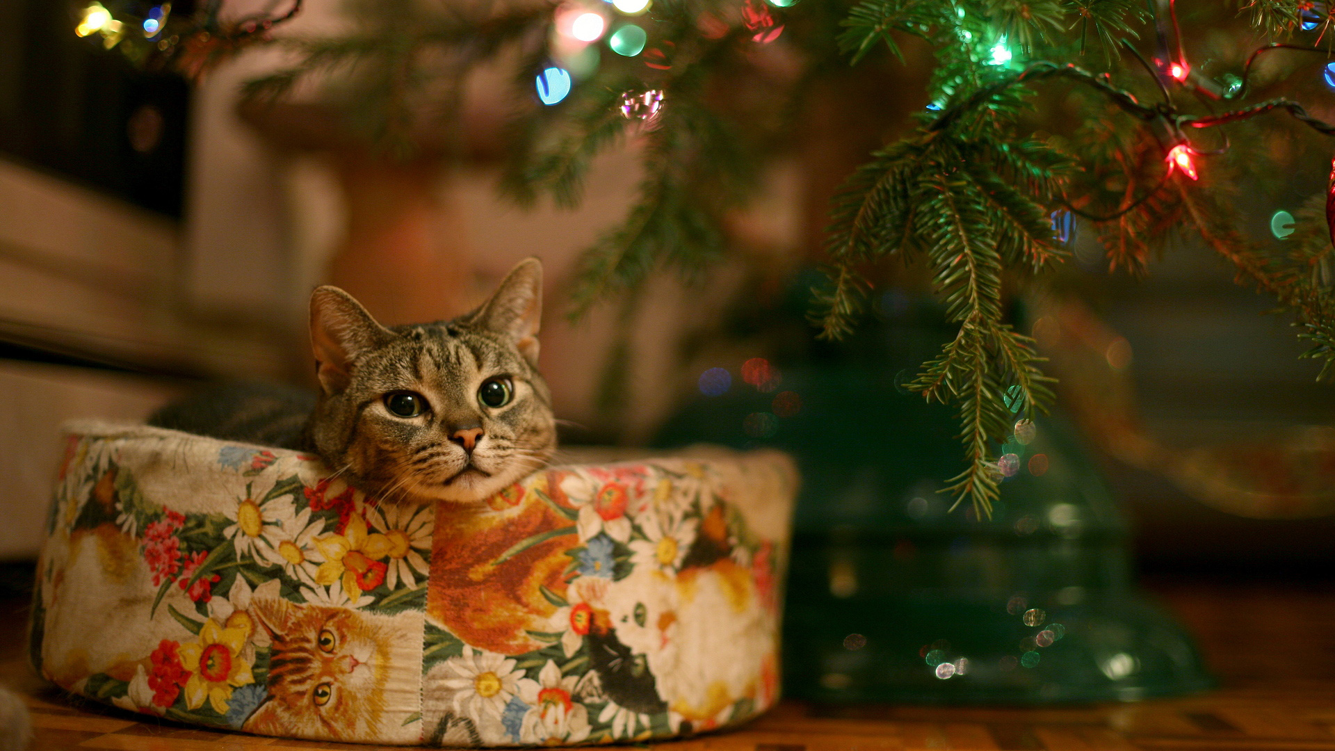 cat_under_christmas_