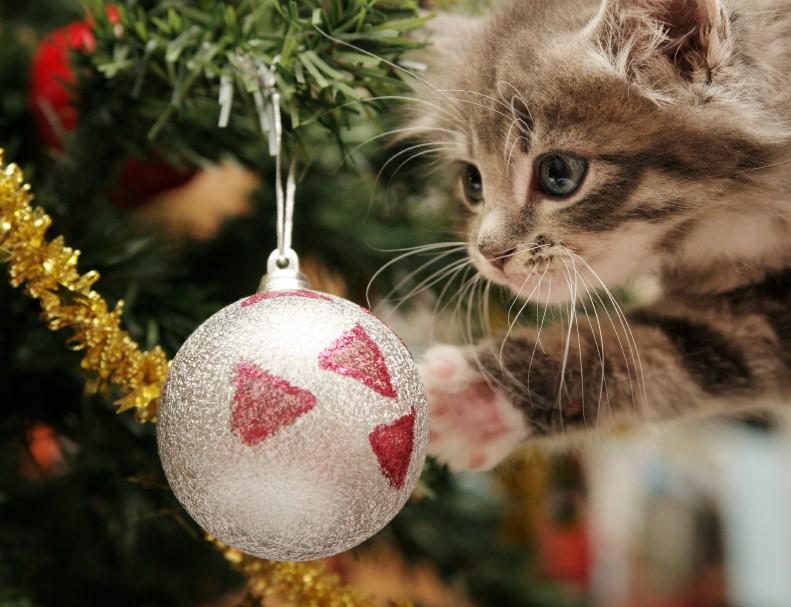 thumbnail_cats-vs-christmas-tree